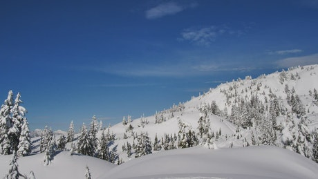 Hill covered with snow and pine