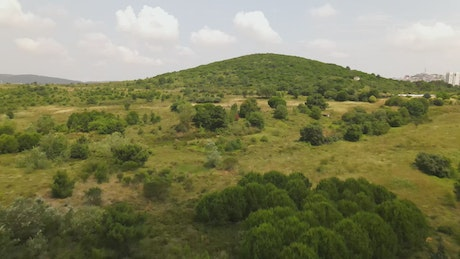 Hill covered with trees and vegetation from above
