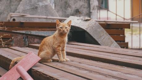 Homeless cat standing on the landfill
