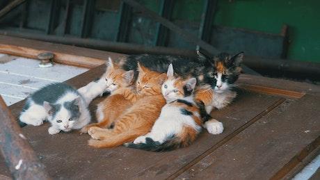 Homeless cats on a wooden door