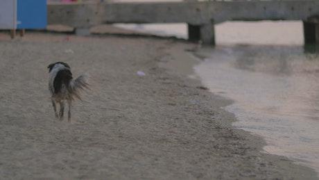 Homeless dog running along the coast