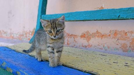 Homeless gray kitten is walking on the street