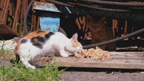 Homeless little kitten eating