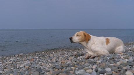 Homeless sad dog by the sea