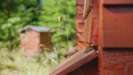 Honey producing beekeeping farm