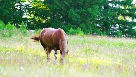 Horse feeding in a meadow