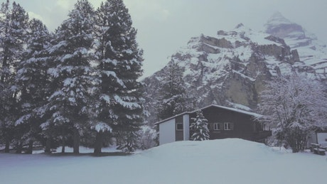 Houses in a forest during winter