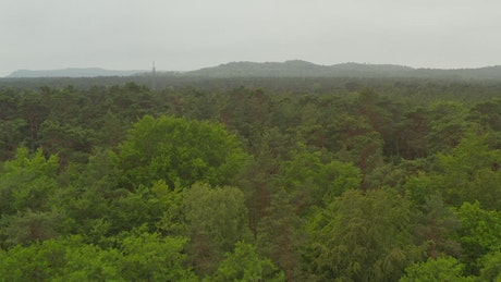 Huge forest full of green trees and mist, aerial