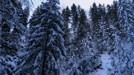 Inside a forest covered in snow