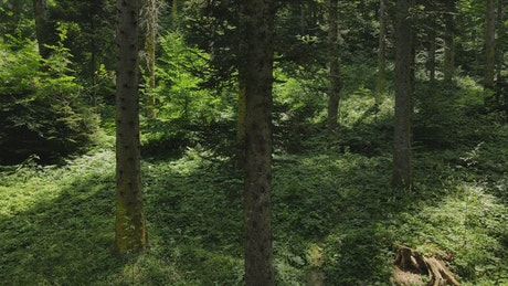 Inside a forest of tall trees and vegetation