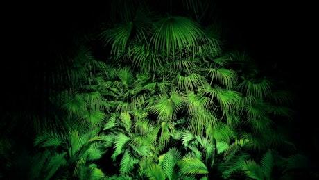 Jungle plants at night, loop video