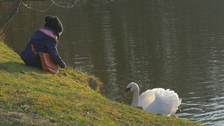 Kid feeding a white swan in the lake