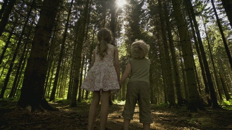 Kids looking around a forest