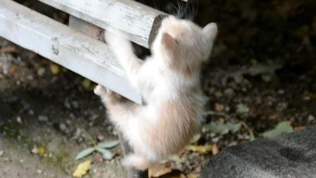Kitten hiding outside