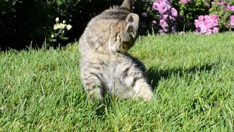 Kitten laying in a garden