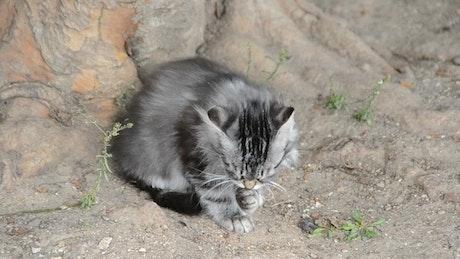 Kitten outside cleaning