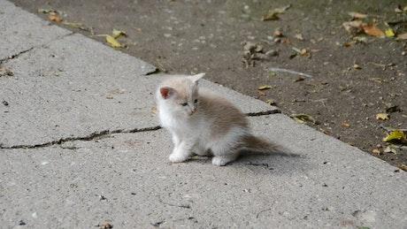 Kitten walking alone
