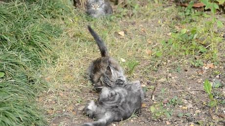 Kittens fighting in a field