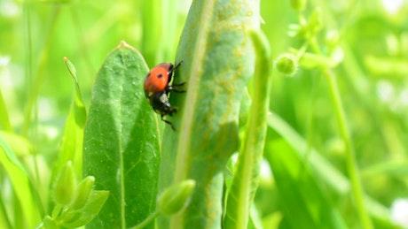 Ladybug sitting on a leaf