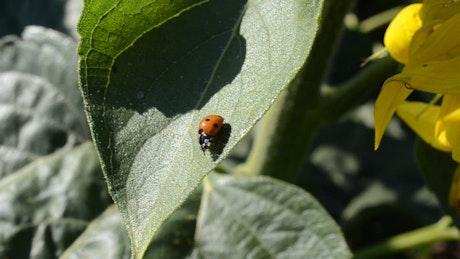 Ladybug sitting on a plant