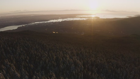 Lake from a pine forest during a sunset