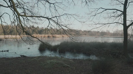 Lake in a forest during the winter