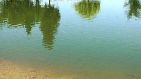 Lake reflecting trees