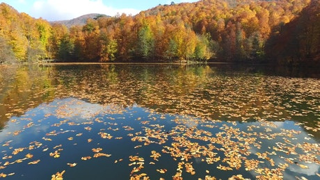 Lake with autumn leaves