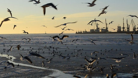 Landing at low tide