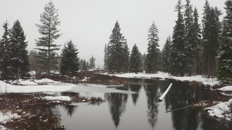 Landscape of a snowy forest with a river