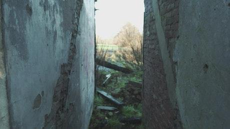 Landscape surrounding an abandoned house