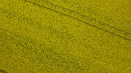 Large crop field