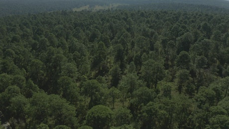 Large forest of abundant trees from above