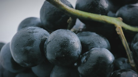 Large purple grapes with a close focus