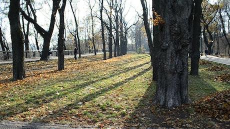 Last leaves on Autumn trees