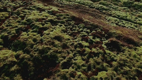 Lava field covered with grass