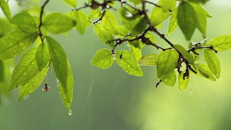 Leaves during a downpour