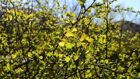 Leaves in a gentle wind