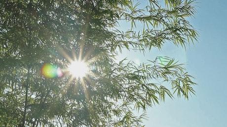Lens flare against the sun