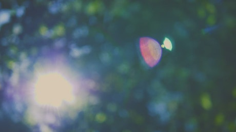 Lens flares from the sun through the out-of-focus trees