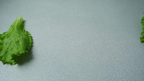 Lettuce leaves entering the shot