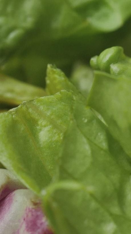 Lettuce leaves in a very close shot