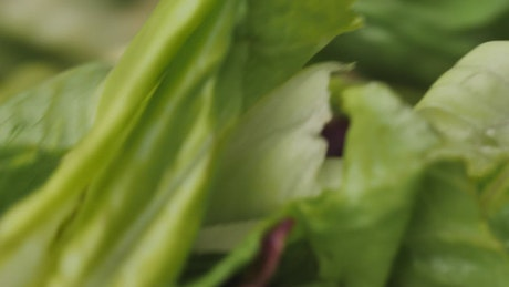 Lettuce salad spinning in a very close shot