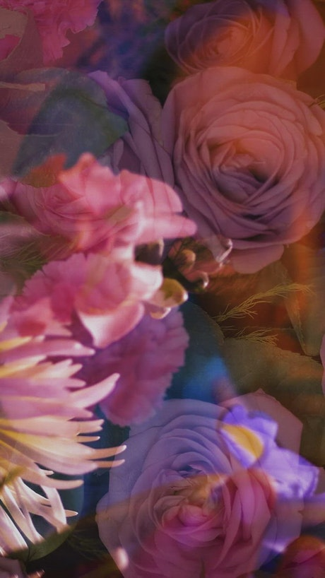 LGBTQ conceptual video of a boy's hand appreciating flowers