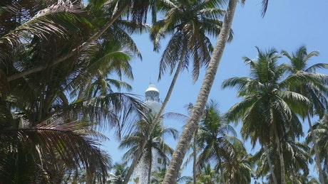 Lighthouse behind the palm trees