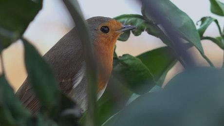 Little bird on a tree branch