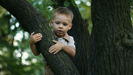 Little boy climbing a tree