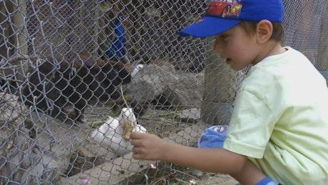 Little boy feeding rabbits in a cage