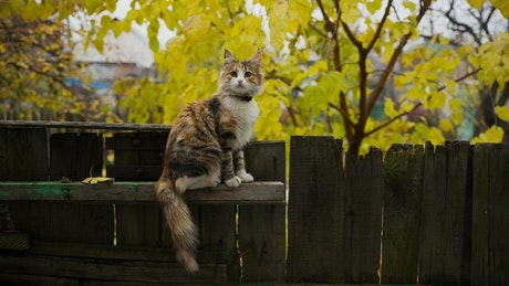 Little cat on a fence in the gaden