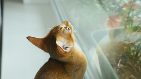 Little cat staring at the window